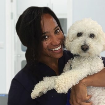 Vets In Ilford Open On Sundays Vets4pets