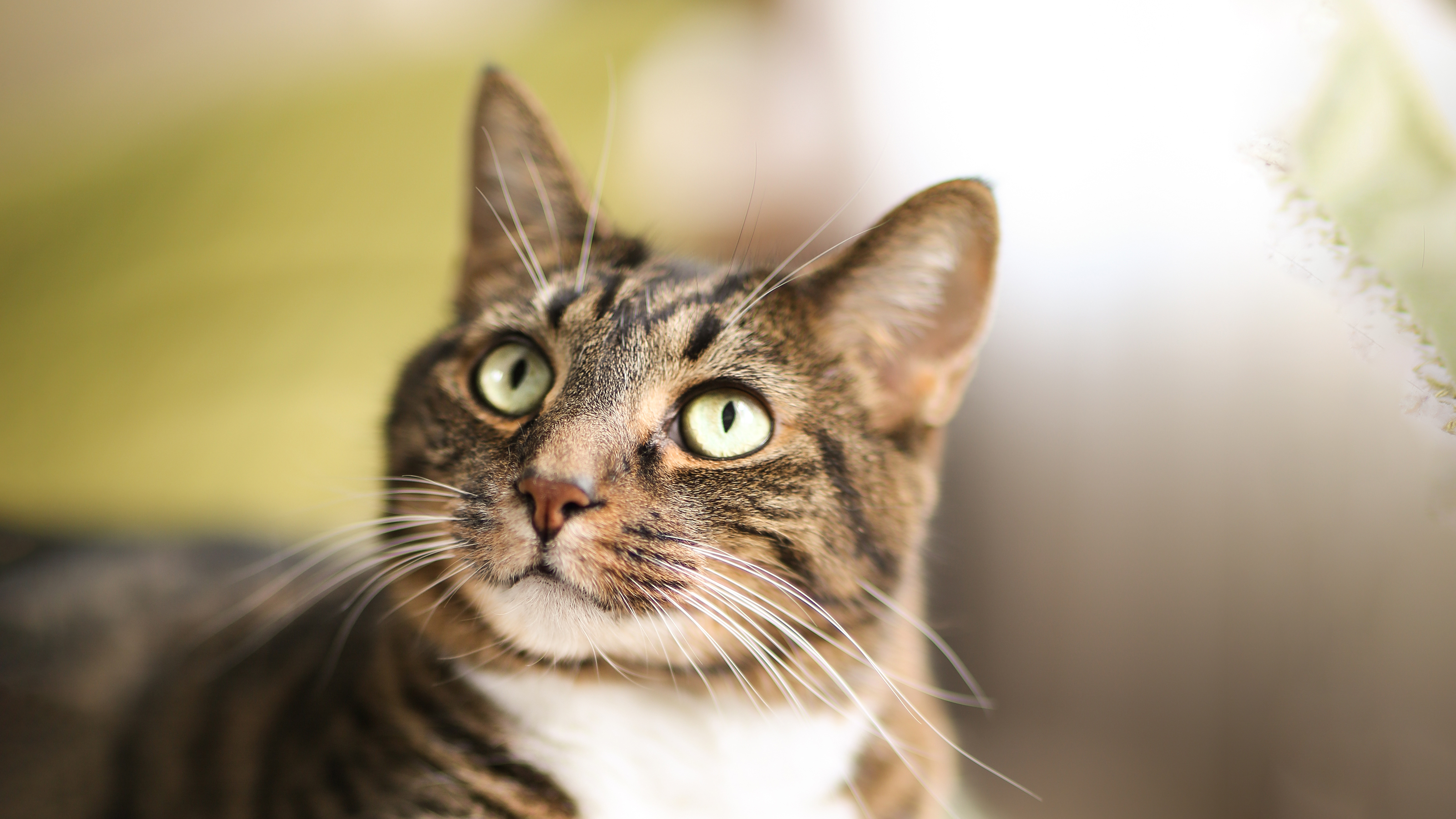 Hypertension in Cats   Vets4Pets