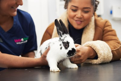 rabbit with vet