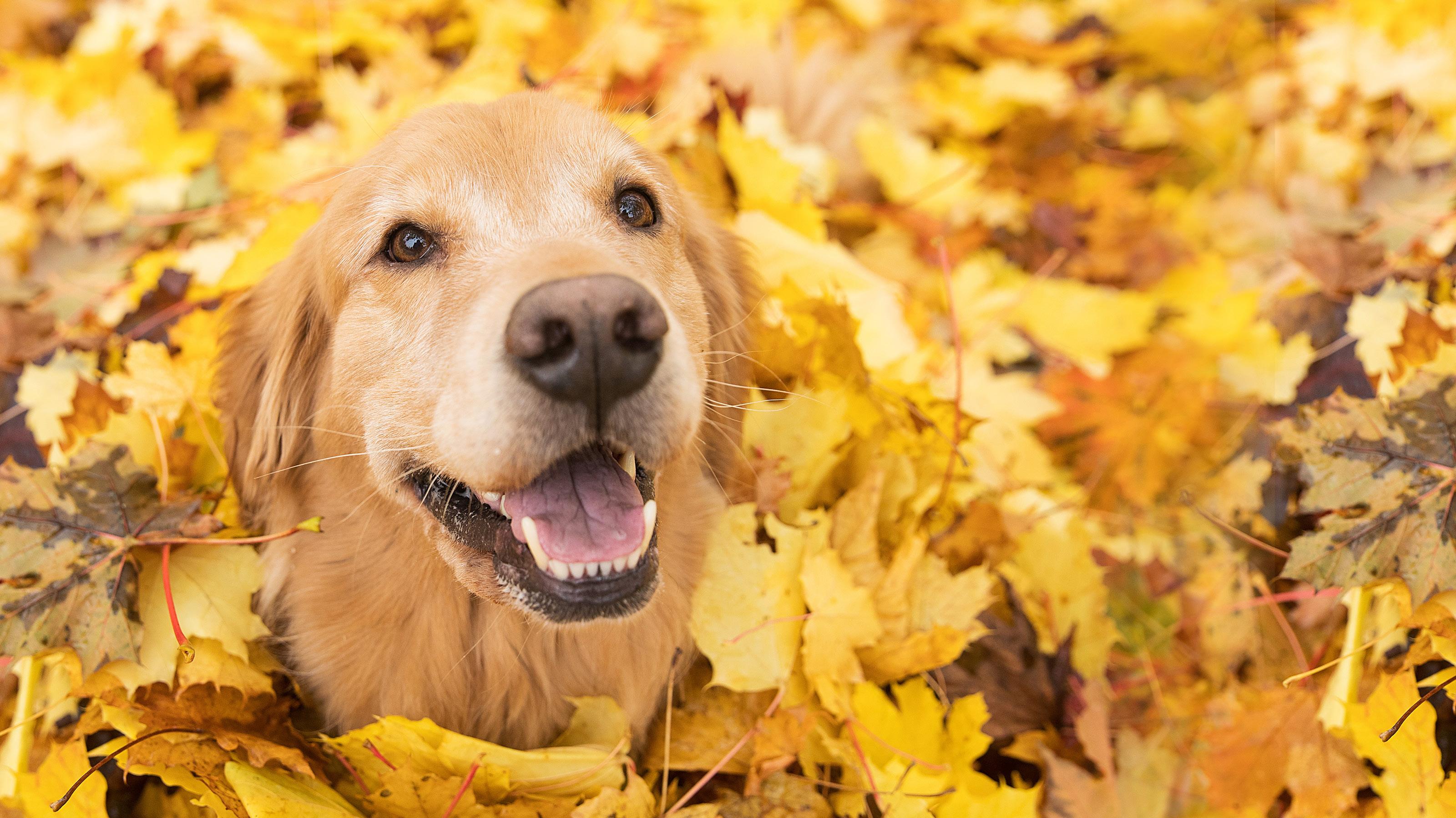 Dog Boarding Activites & Pampering | Meadowlake Pet Resort