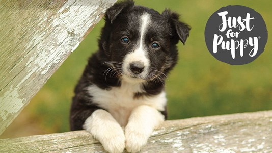 Vets4Pets | Putting Your Pet First | Experts In Vet Care