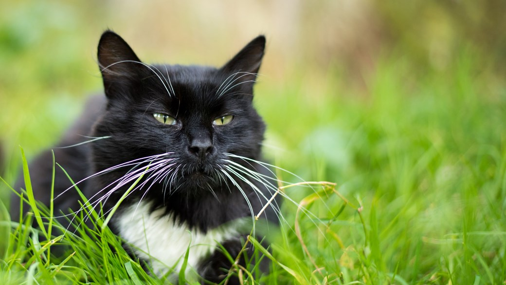 Cat Mite Advice Care Vets4pets