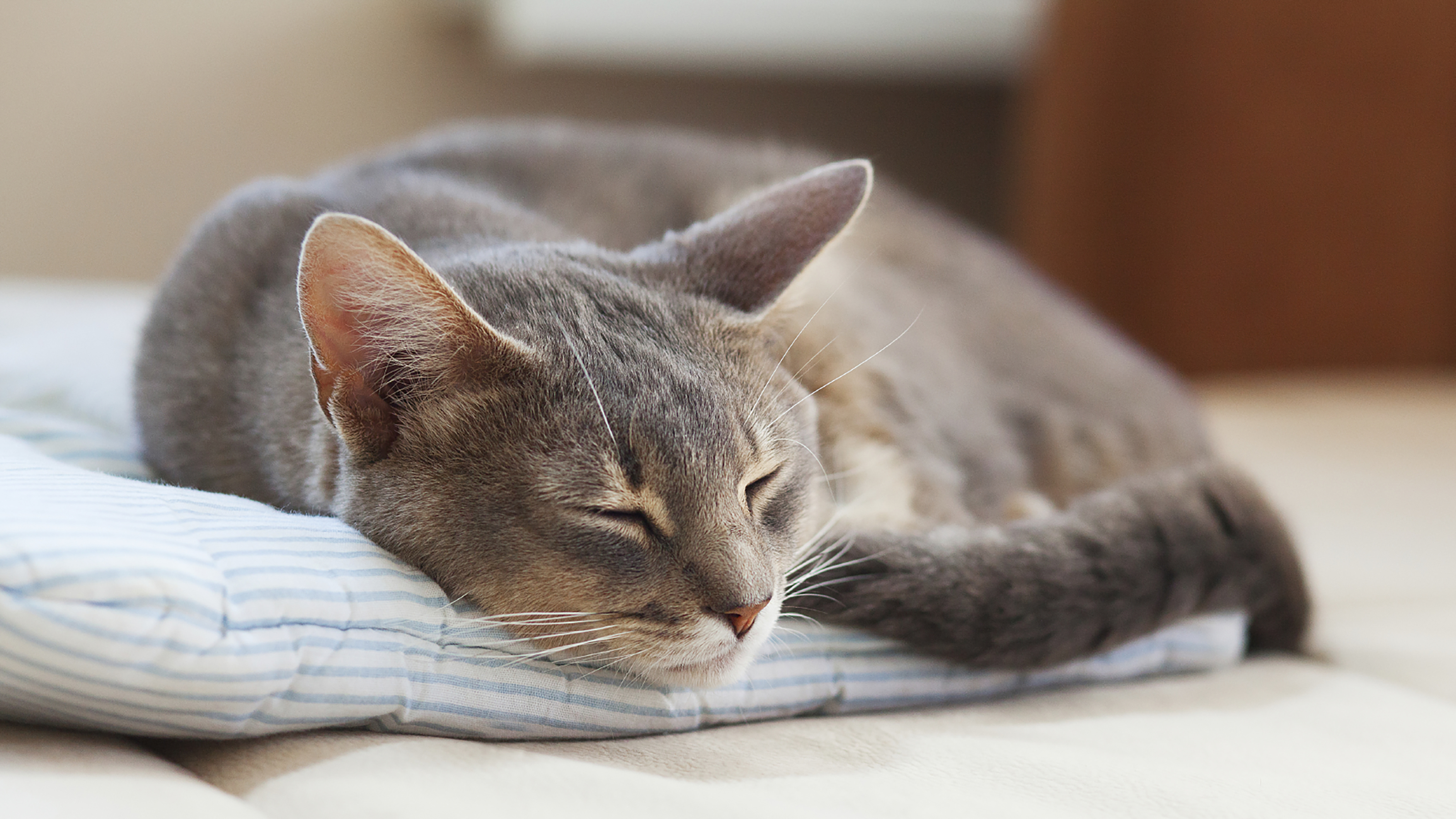 Cat Kidney Disease Advice Care Vets4pets