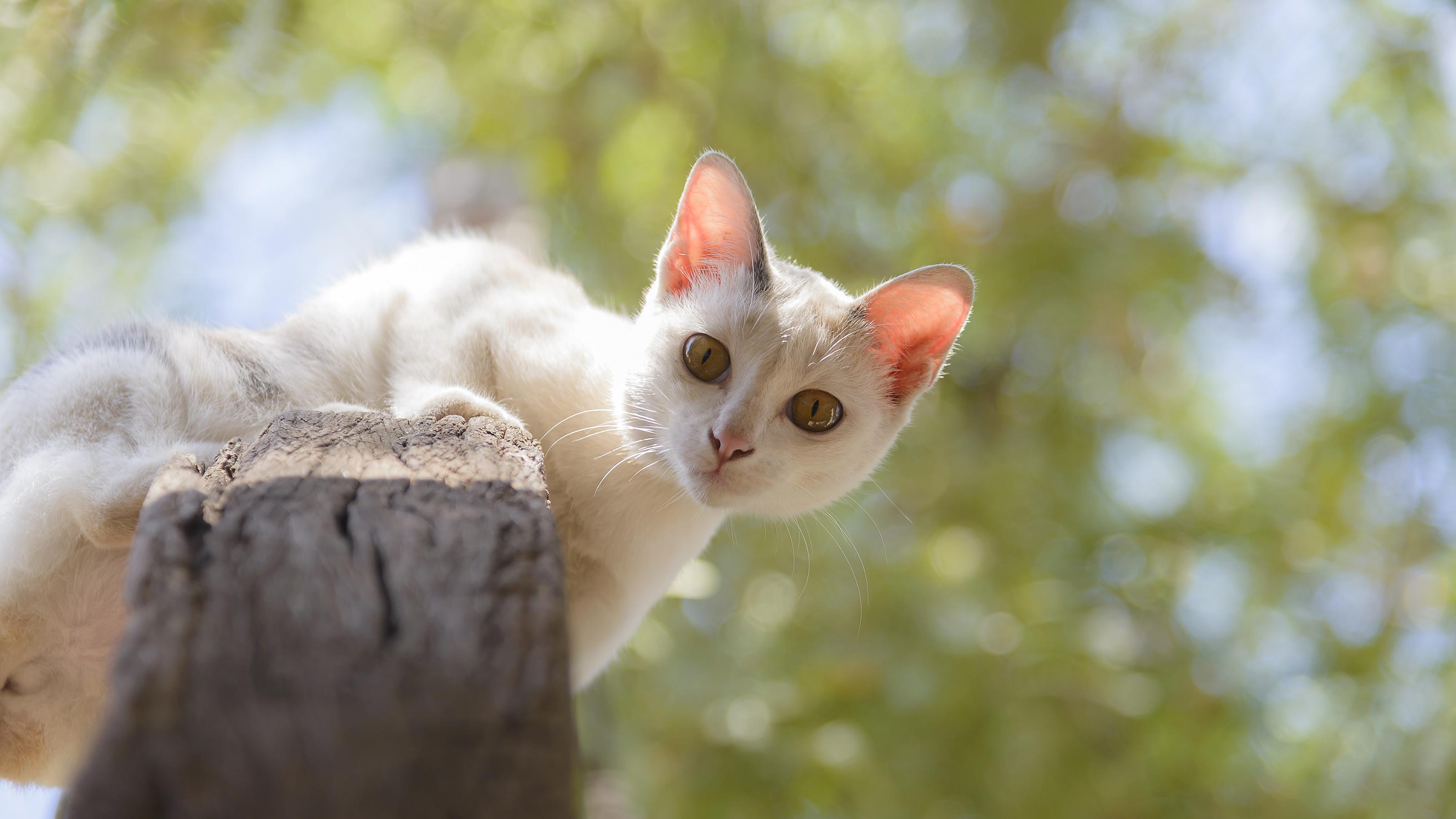 Cat Microchipping   Cat Microchip Advice   Vets4Pets