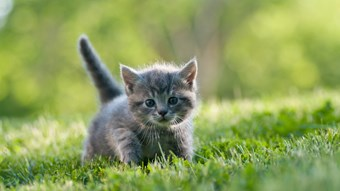 tiny kitten in field
