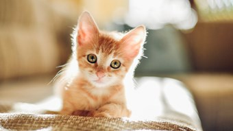 tiny kitten in sunlight