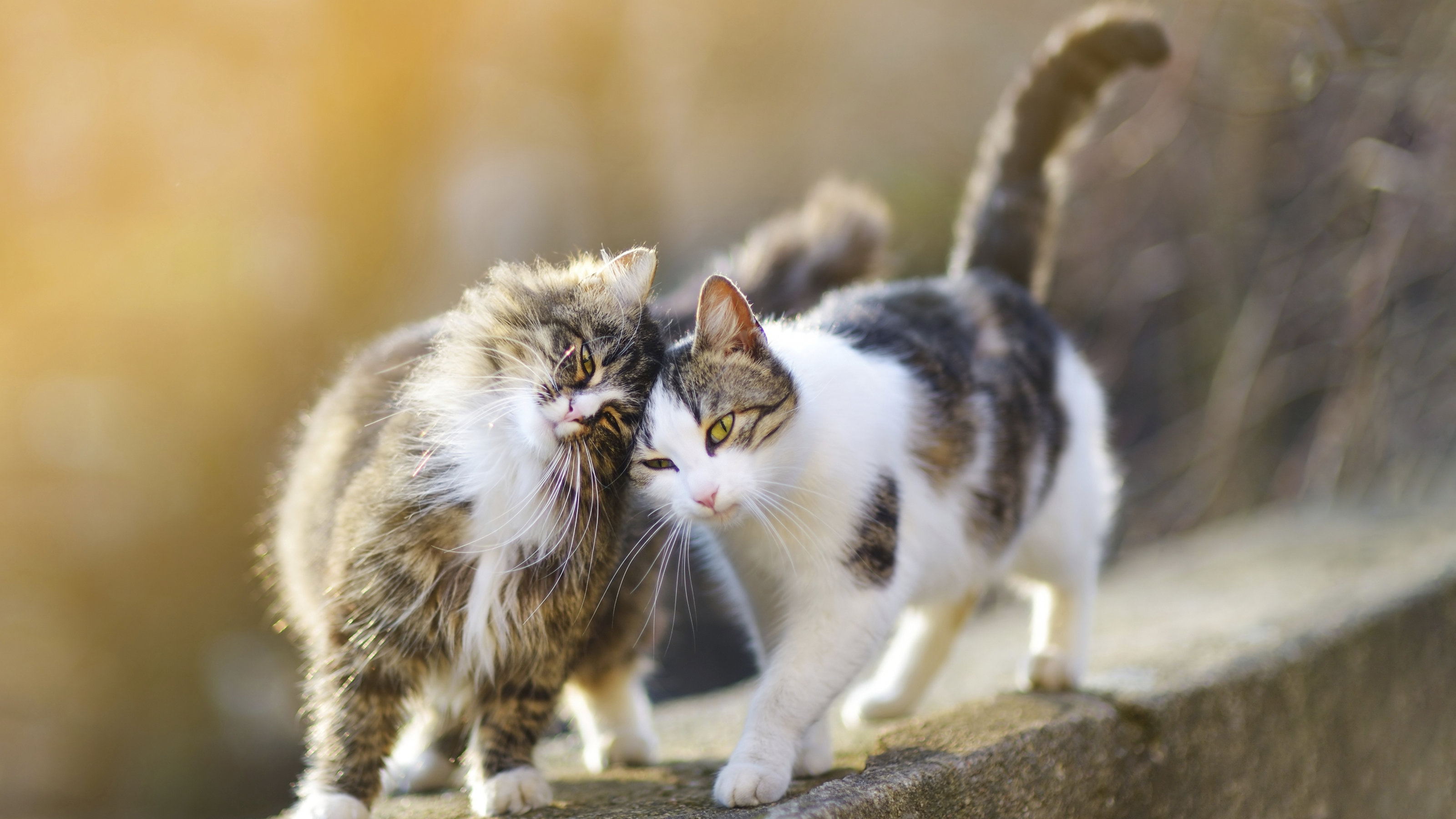 Pet Health Advice | Introducing Cats | Vets4Pets