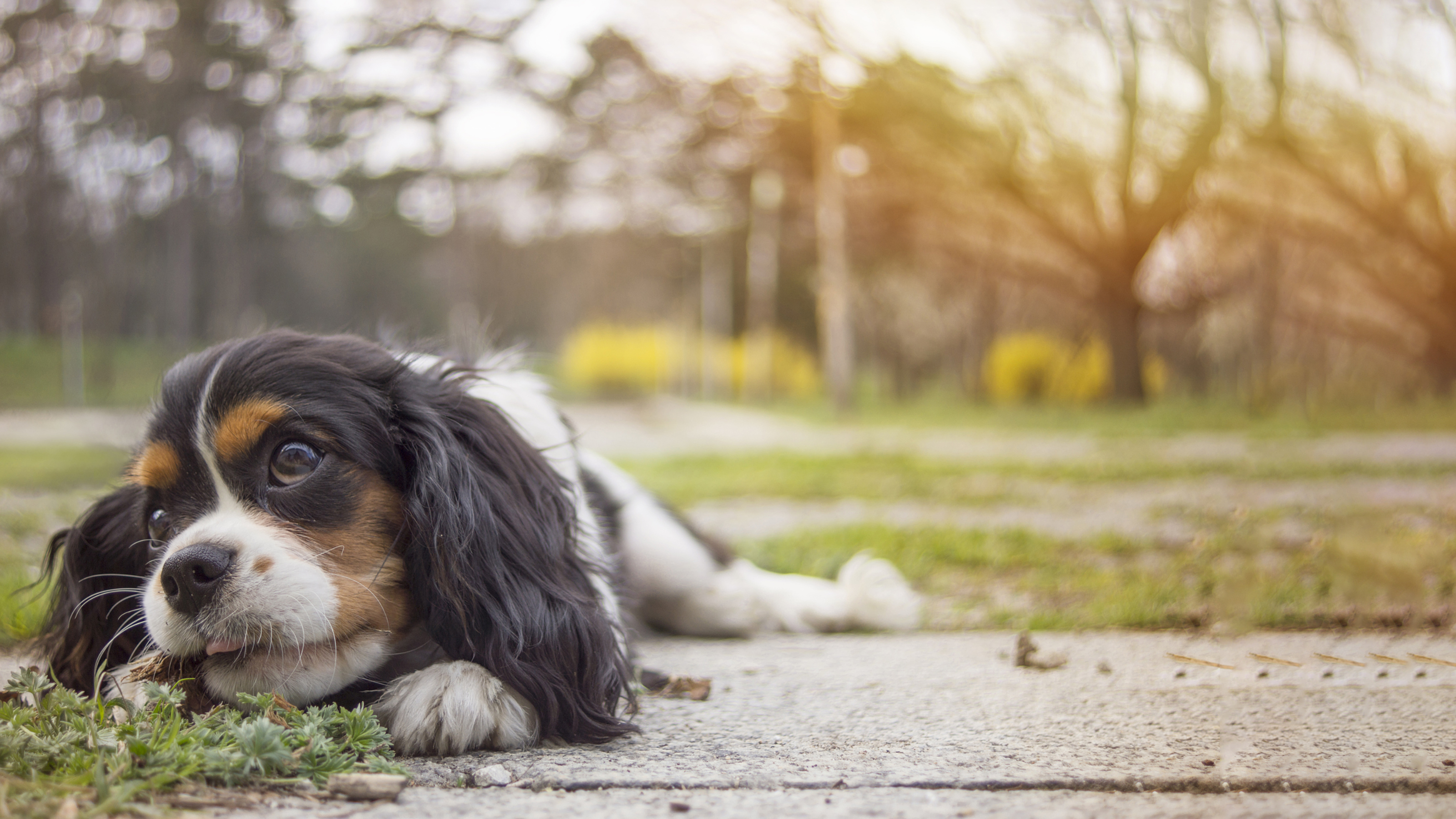 Chocolate Poisoning in Pets   Pet Health Advice   Vets4Pets