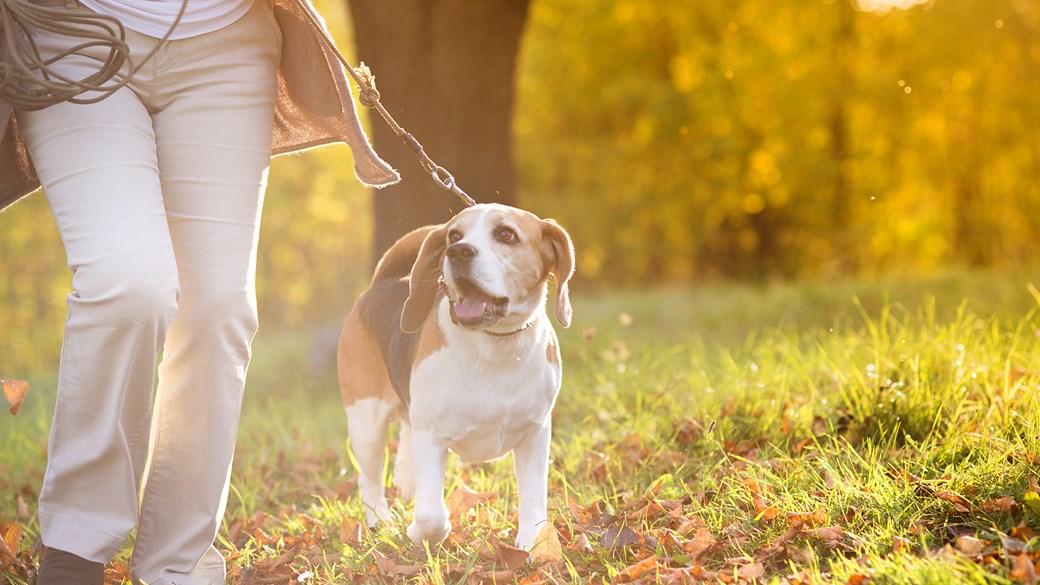 PLAN YOUR WALKS|todocat.com