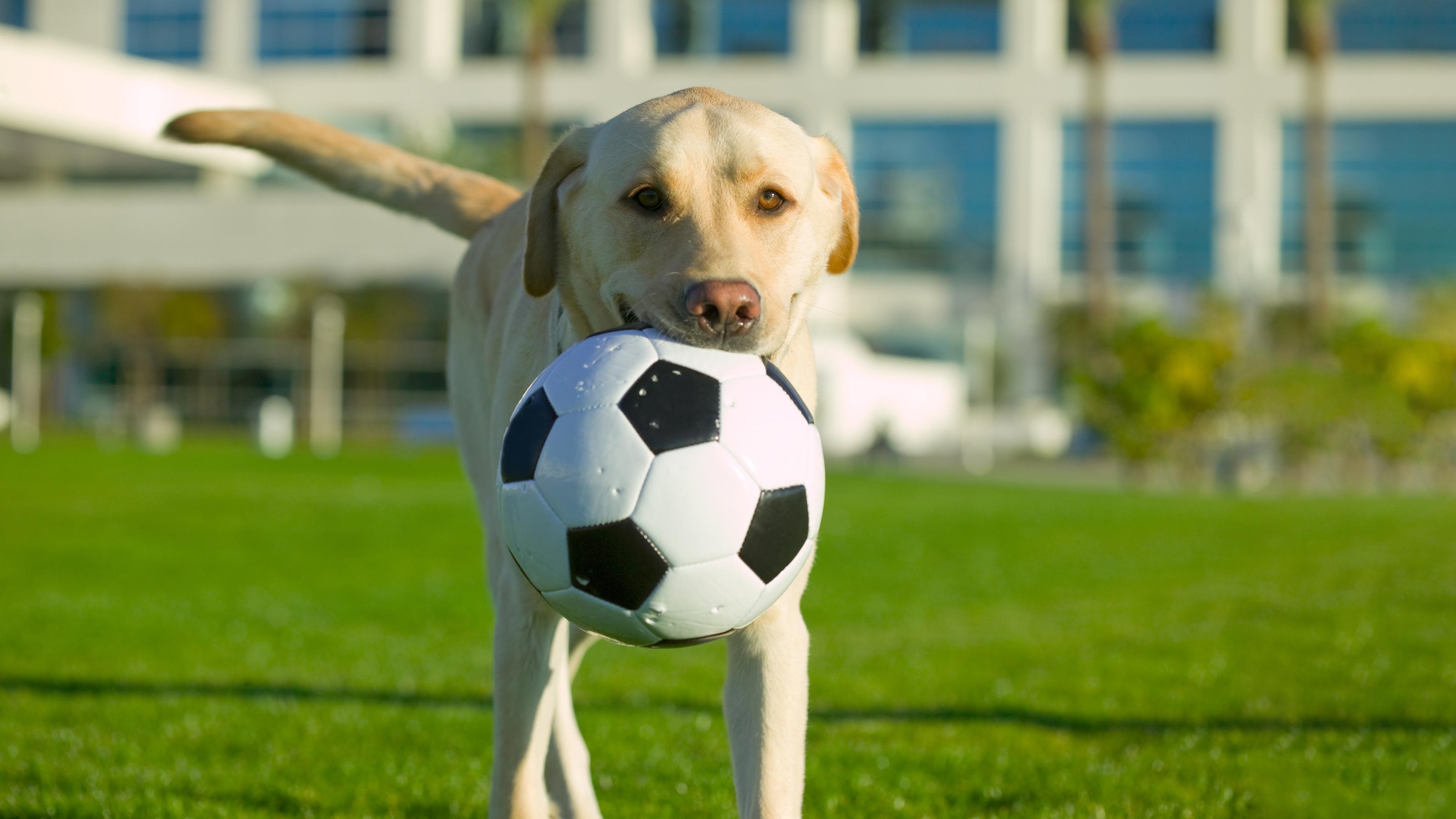 Dog Vaccinations | Dog Advice | Vets4Pets