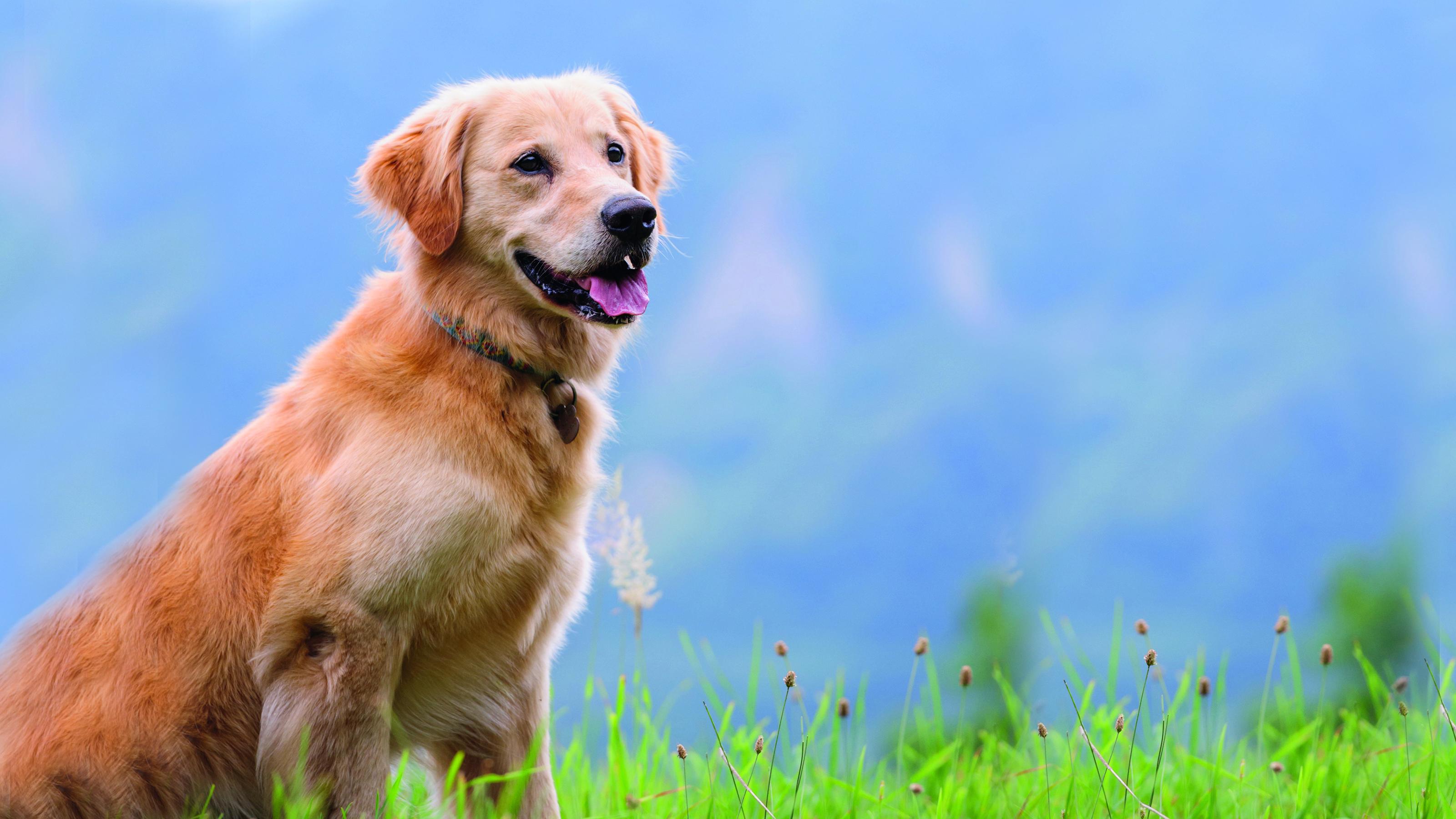 Neutering Your Dog Prevent Pregnancies Disease Vets4pets