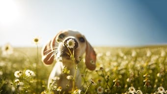 close up of puppy sniffing flower