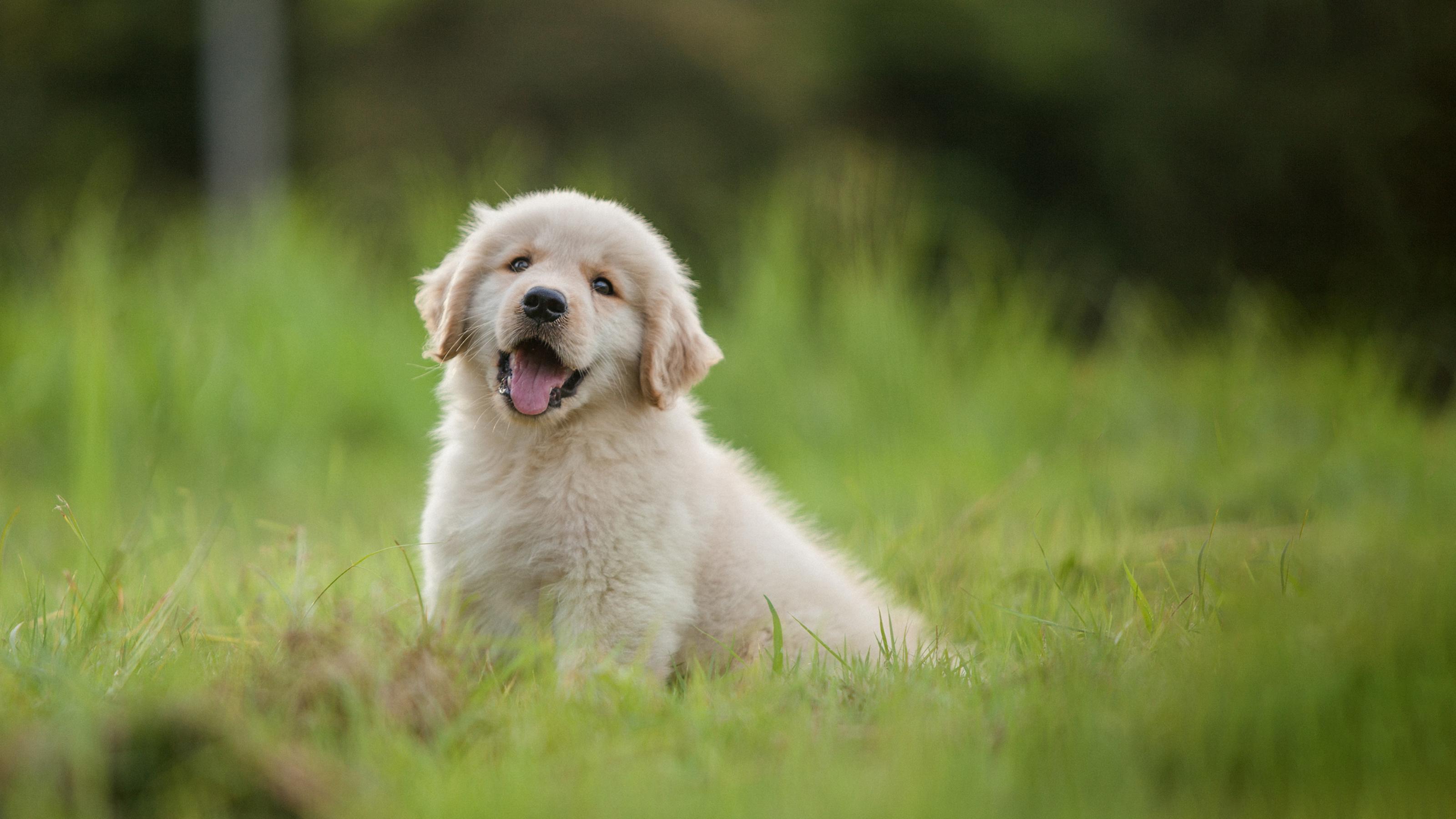 Best Start In Life Pet Health Plans Vets4pets