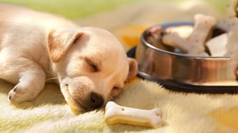 puppy sleeping by food bowl