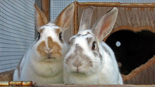 two rabbits close up