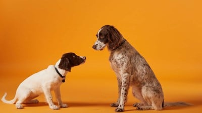 Vets in Guernsey St Martins | Vets4Pets