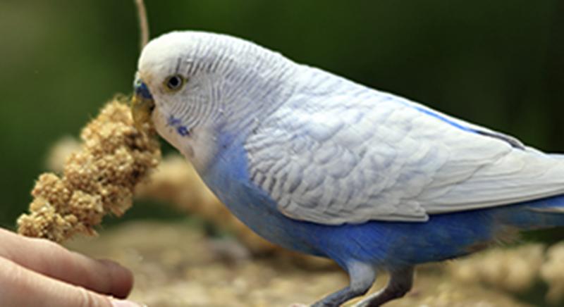 Bird 330 x180