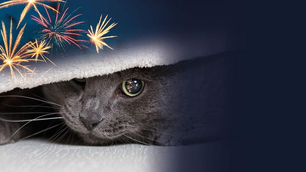 Firework cat image