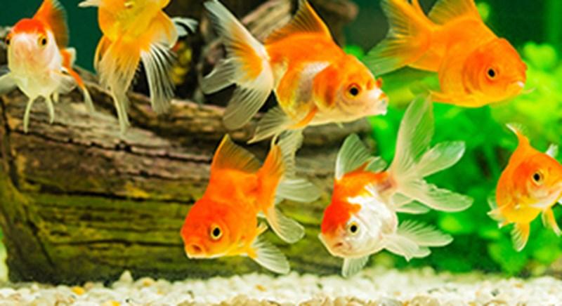 Fish panel image