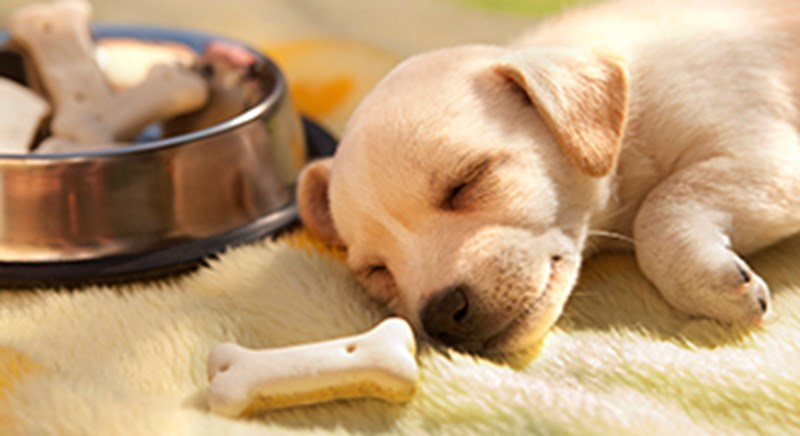 puppy with food 330x180