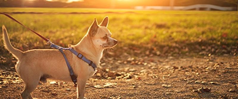 Summer - dog