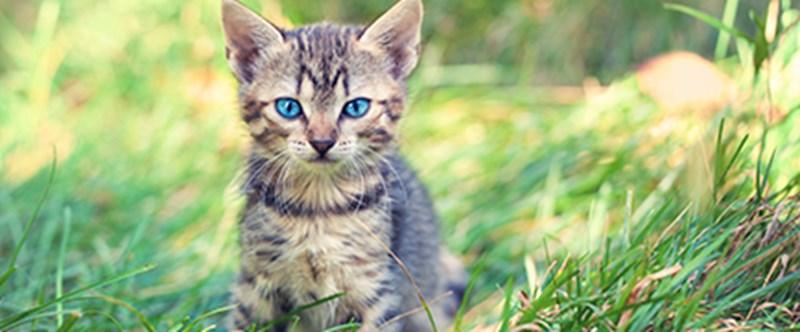 Summer - kitten