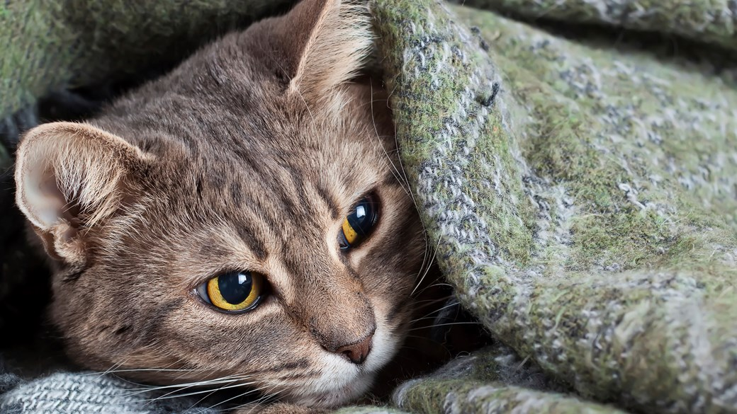 cat curled up in blanket