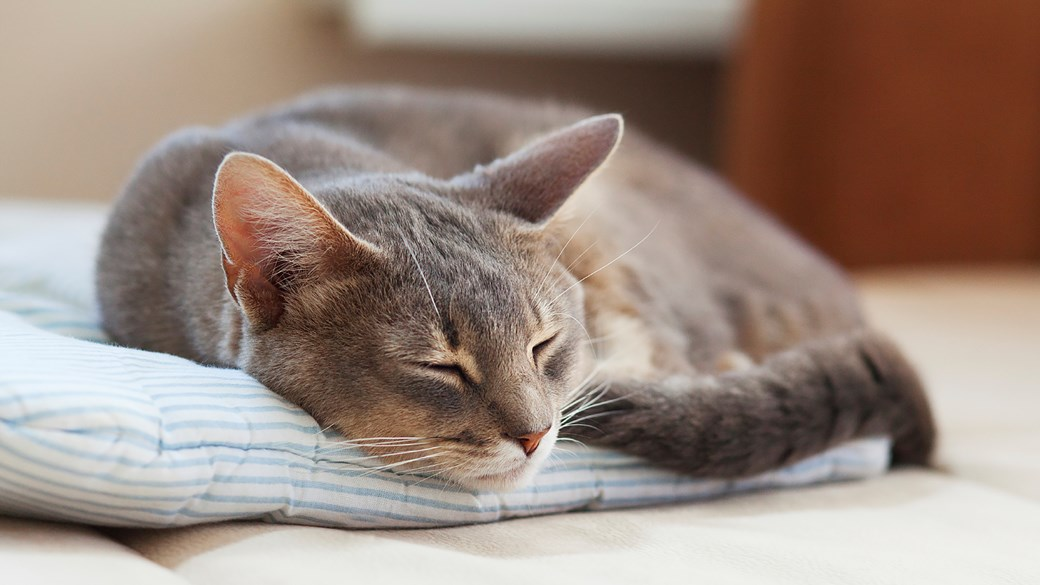 cat curled up lying down on blanket