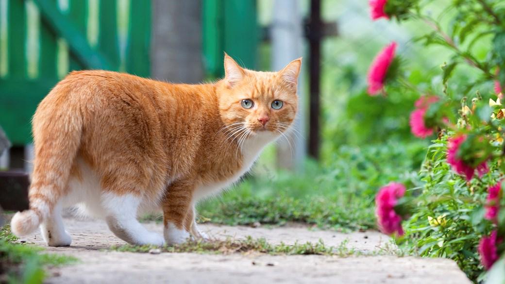 cat in garden path by gate
