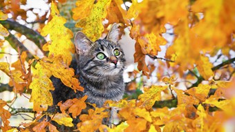 cat outside in autumn leaves