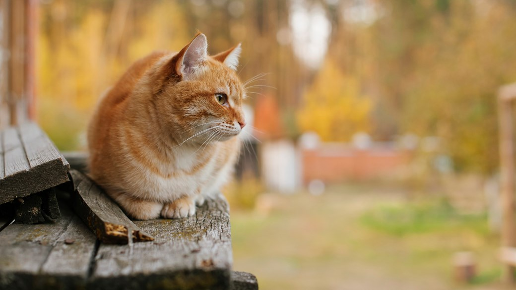 cat sat out bench