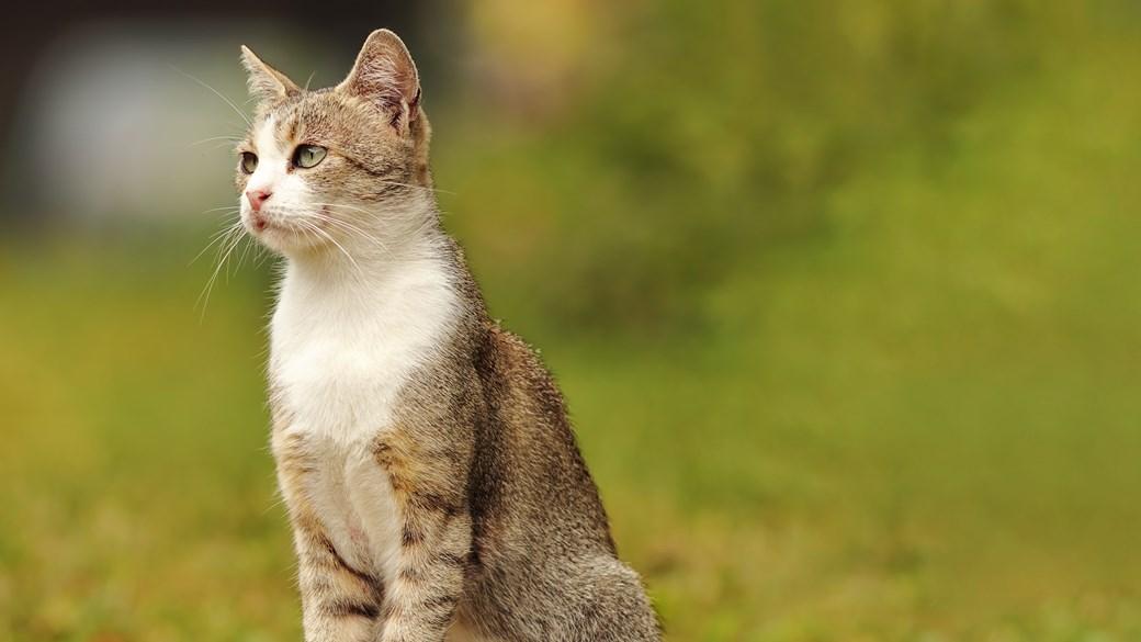 cat sat up observing