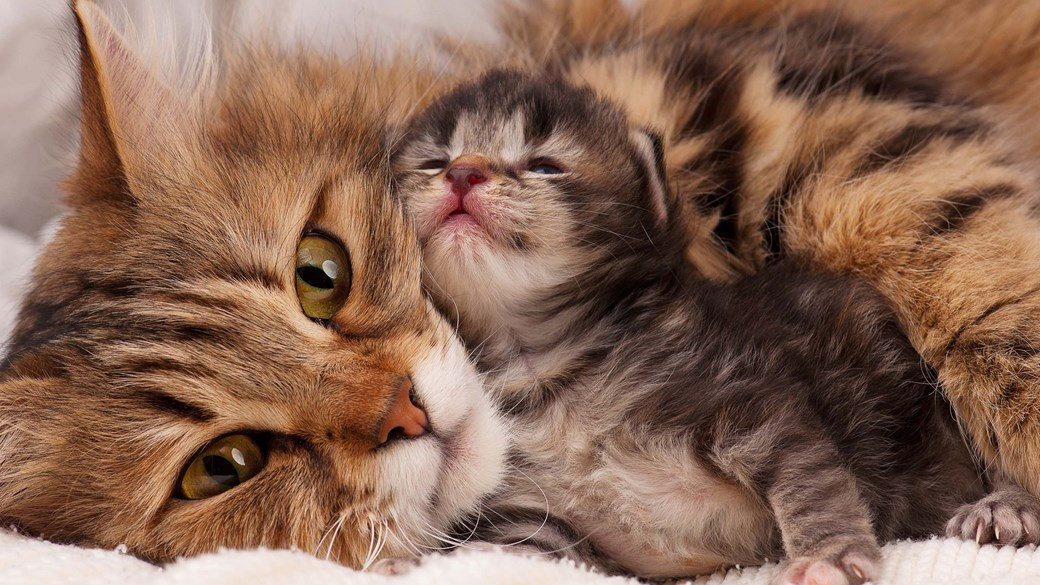 cat and kitten snuggling
