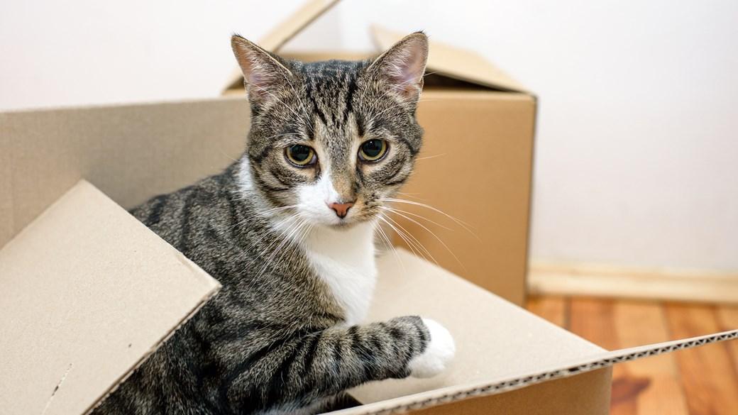 kitten in cardboard box