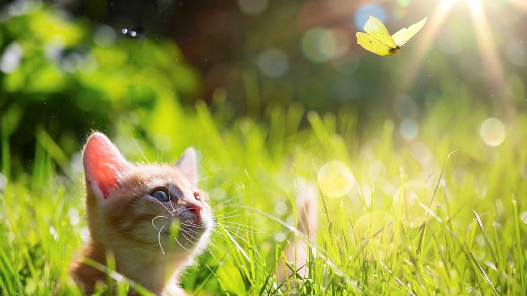 kitten in field summer
