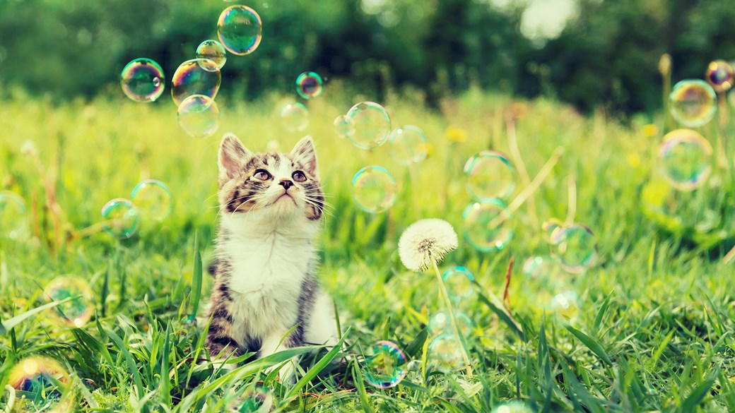 kitten in field with bubbles