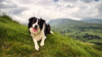 Border collie dog on mountain