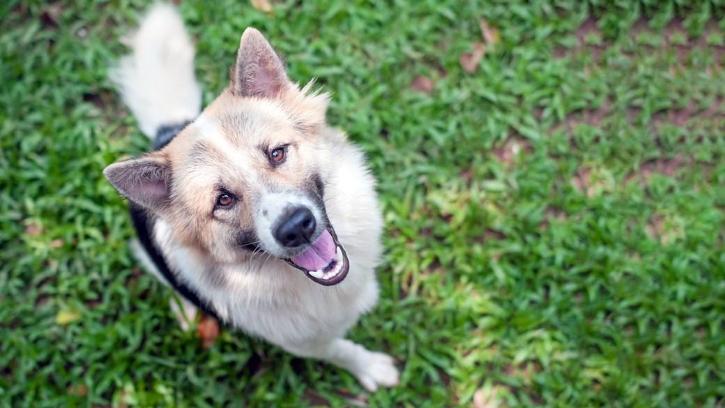 dog looking up at camera close up