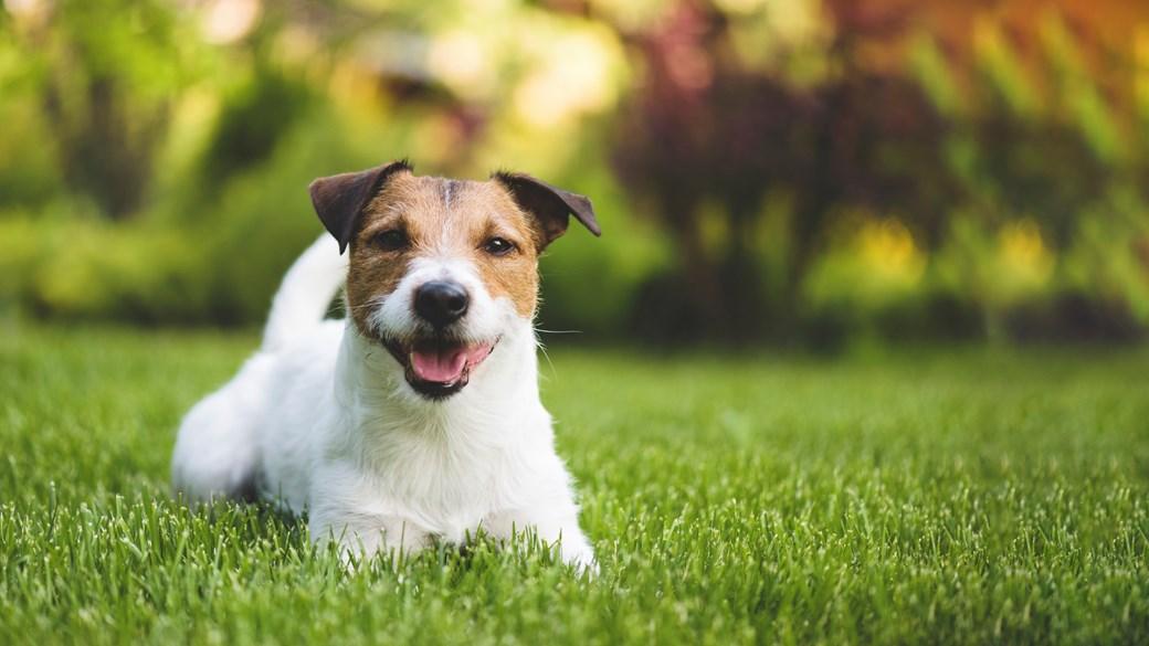 dog on walk in field