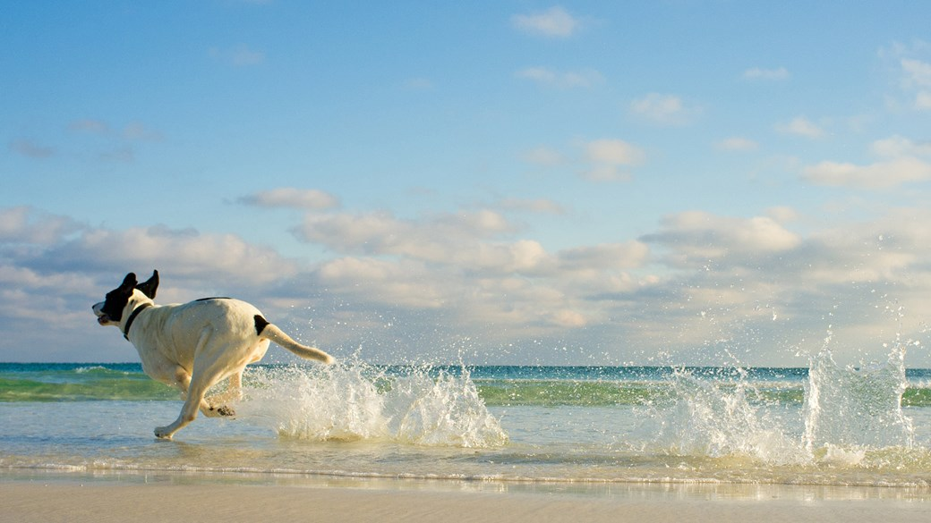 dog running through sea waves