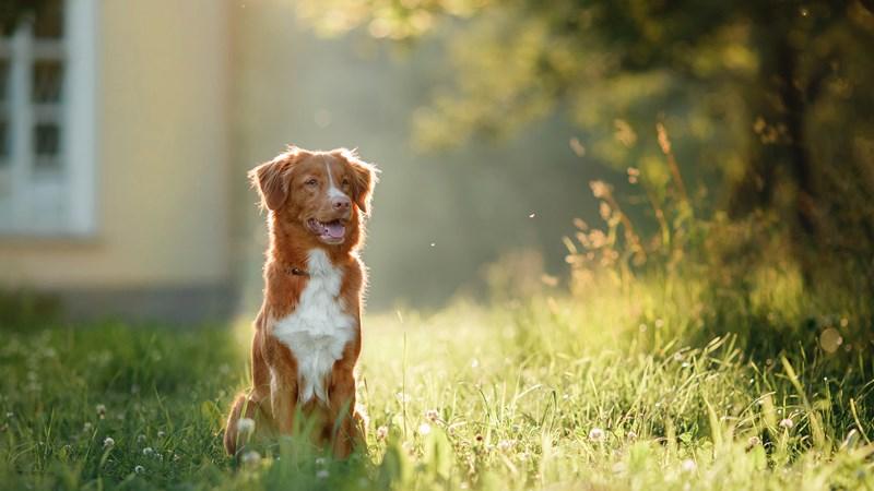 dog sat outside house