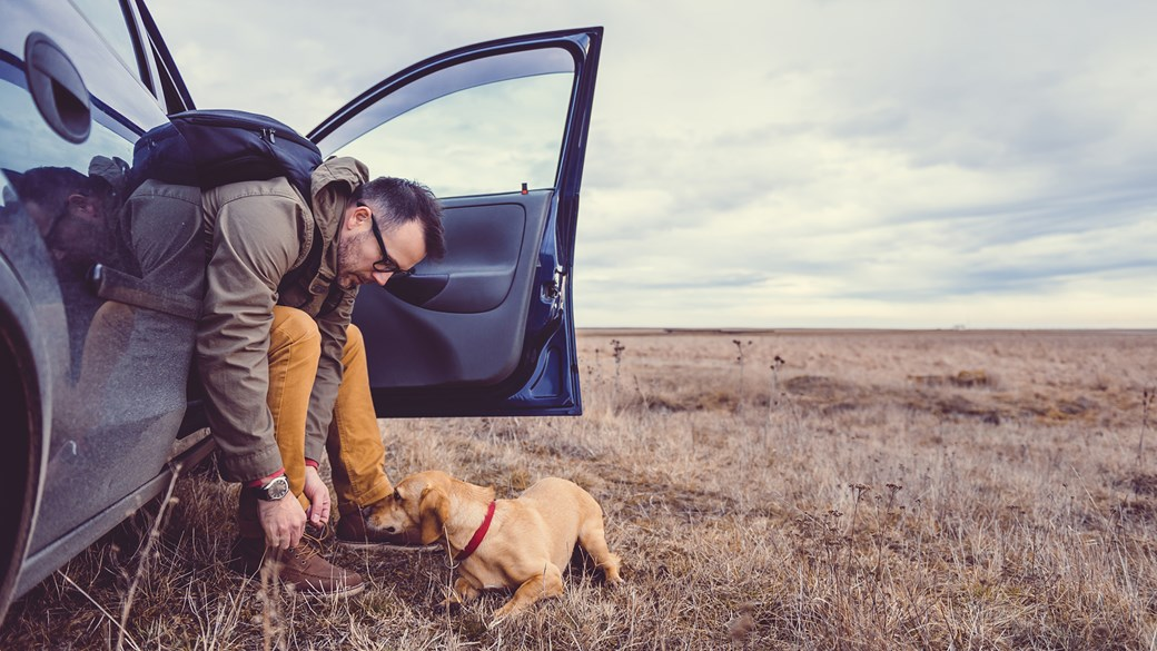 dog with owner in car