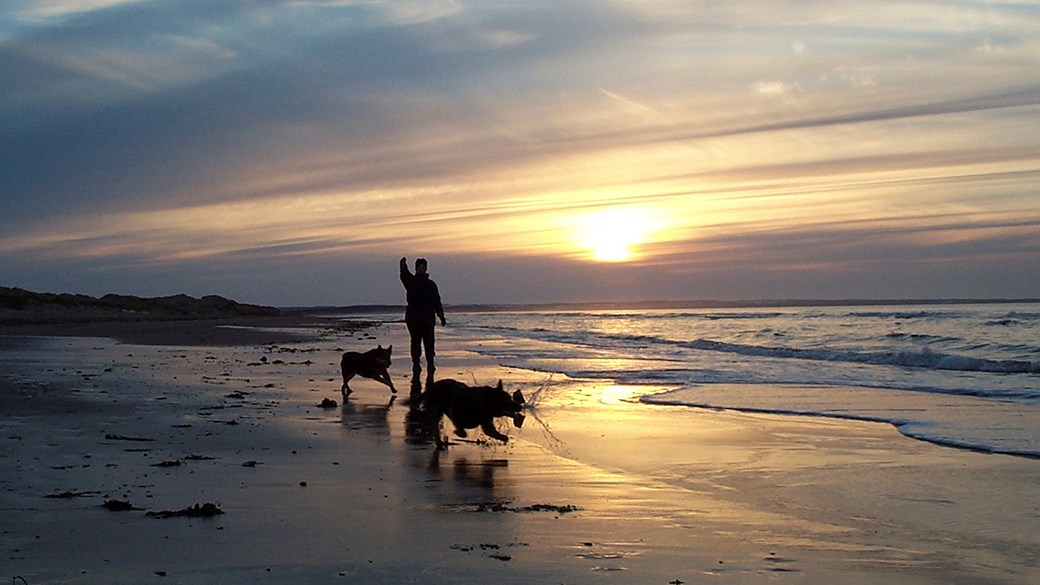 dogs walking silhouette on beach