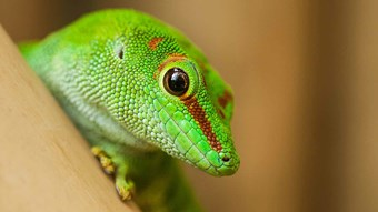 green Reptile close up