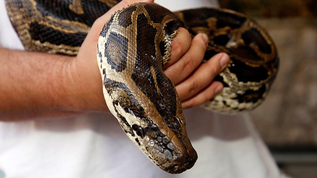 handling snake close up